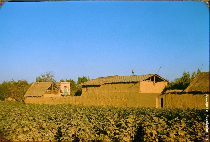 Photographie (résolution écran) : Fonds photographique Jacques Dupâquier — Voyage en URSS en 1956 — Ouzbekistan : «Constructions paysannes en Asie centrale»