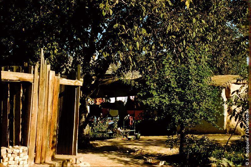 Photographie (résolution écran) : Fonds photographique Jacques Dupâquier — Voyage en URSS en 1956 — Ouzbekistan : «Tachkent-Une cour de maison»