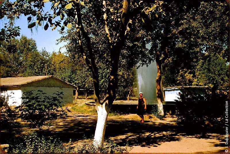 Photographie (résolution écran) : Fonds photographique Jacques Dupâquier — Voyage en URSS en 1956 — Ouzbekistan : «Tachkent-Jardins de l'usine Staline»