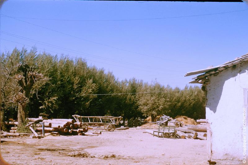Photographie (résolution écran) : Fonds photographique Jacques Dupâquier — Voyage en URSS en 1956 — Ouzbekistan : «Le kolkhoze Staline près de Tachkent»