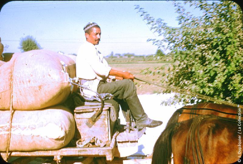 Photographie (résolution écran) : Fonds photographique Jacques Dupâquier — Voyage en URSS en 1956 — Ouzbekistan : «Transport du coton»