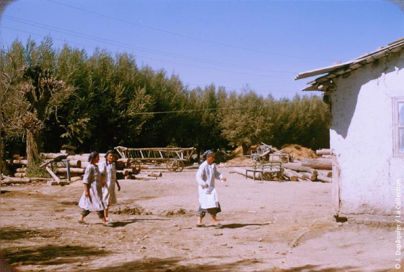 Photographie (résolution écran) : Fonds photographique Jacques Dupâquier — Voyage en URSS en 1956 — Ouzbekistan : «Des kolkhoziennes au kolkhoze Staline près de Tachkent»