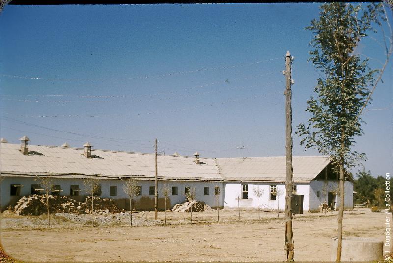 Photographie (résolution écran) : Fonds photographique Jacques Dupâquier — Voyage en URSS en 1956 — Ouzbekistan : «Etable modèle au kolkhoze Staline près de Tachkent»