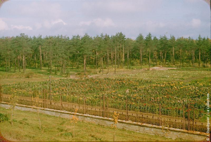 Photographie (résolution écran) : Fonds photographique Jacques Dupâquier — Voyage en URSS en 1956 — Moscou : «Jardin d'expérimentation dans la banlieue de Moscou aux limites de la taïga»