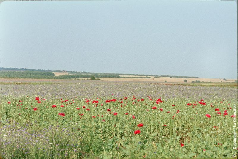 Photographie (résolution écran) : Fonds photographique Jacques Dupâquier — Voyage en URSS en 1964 — De Moscou au Caucase : «Cultures florales près de Plavsk»