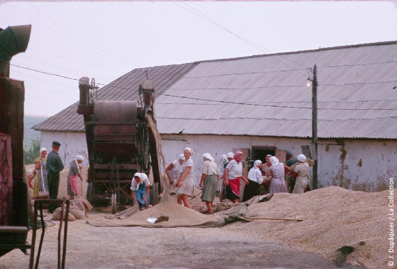 Photographie (résolution écran) : Fonds photographique Jacques Dupâquier — Voyage en URSS en 1964 — De Moscou au Caucase : «Près de Jernovets-Battage du grain»