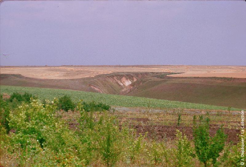 Photographie (résolution écran) : Fonds photographique Jacques Dupâquier — Voyage en URSS en 1964 — De Moscou au Caucase : «Terres noires et ovragi (ravinements) au sud de Koursk»