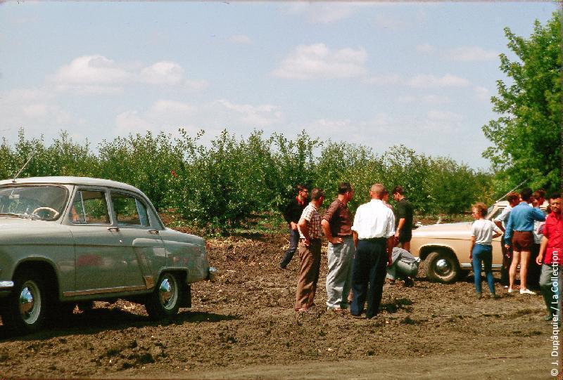 Photographie (résolution écran) : Fonds photographique Jacques Dupâquier — Voyage en URSS en 1964 — De Moscou au Caucase : «Visite du sovkhoze Dvodianaïa Balka (Territoire de Krasnodar)»