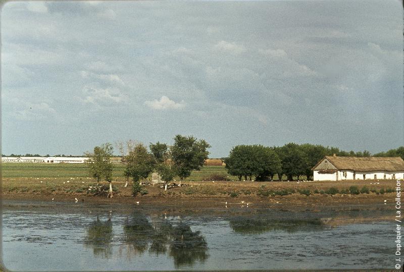 Photographie (résolution écran) : Fonds photographique Jacques Dupâquier — Voyage en URSS en 1964 — De Moscou au Caucase : «Exploitation collective au bord de la rivière Eya (plaines du Kouban)»