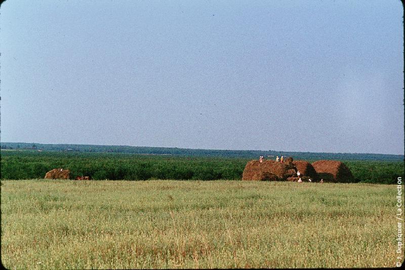 Photographie (résolution écran) : Fonds photographique Jacques Dupâquier — Voyage en URSS en 1964 — Sur la route de Moscou-Minsk Smolensk Borodino : «Sur la route de Smolensk-Travaux des champs en Biélorussie»