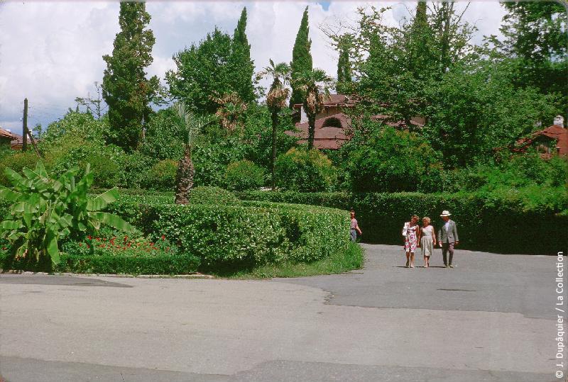 Photographie (résolution écran) : Fonds photographique Jacques Dupâquier — Voyage en URSS en 1964 — Caucase et Georgie : «Végétation tropicale à Sotchi»