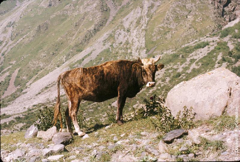 Photographie (résolution écran) : Fonds photographique Jacques Dupâquier — Voyage en URSS en 1964 — Caucase et Georgie : «Sur la route d'Ordjonikidze (actuelle Vladikavkaz)-Haute vallée du Terek-Aux Portes du Diable (1300m)»